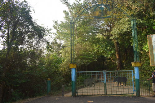 Entry gate to Bisle Ghat view point